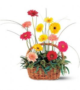 Gerbera Basket (TF202-2)