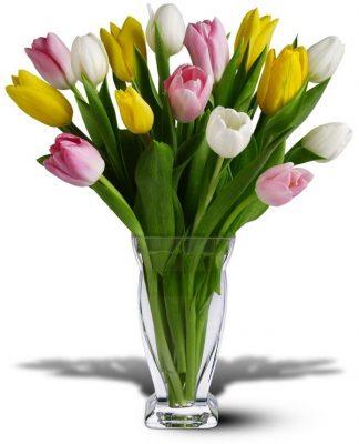 Tulip Rainbow (TW10-406)