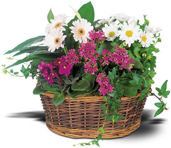European Garden Basket (TW10-127)