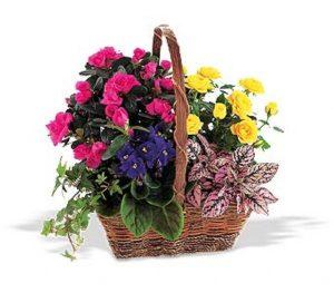 Sympathy Plant Basket (TF191-1)