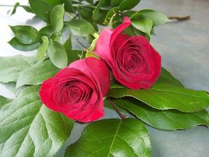 2 Red Roses (RS02-10)