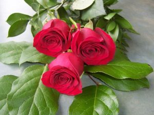 3 Red Roses (RS03-10)
