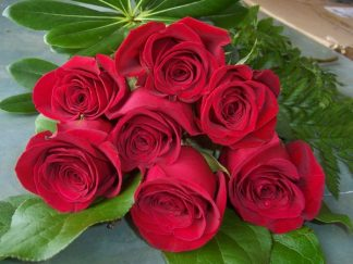 7 Red Roses (RS07-10)