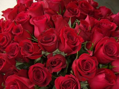 24 Red Roses (RS24-10)