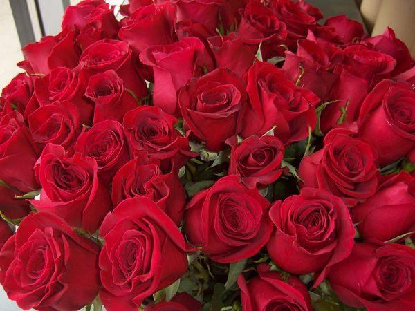 * Roses
