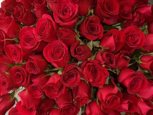 365 Red Roses