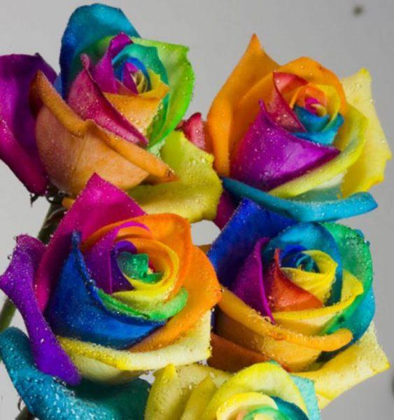 4 Rainbow Roses (RSR04-11)