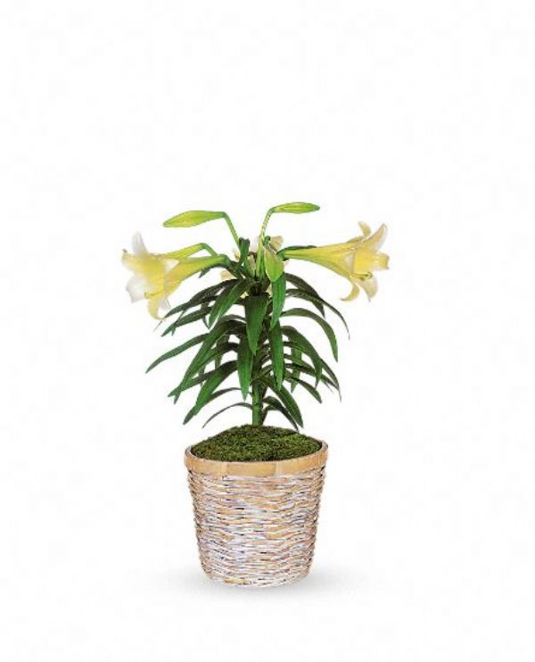 Easter Lily Basket (E13-01)