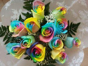 12 Rainbow Roses (RSR12-13)