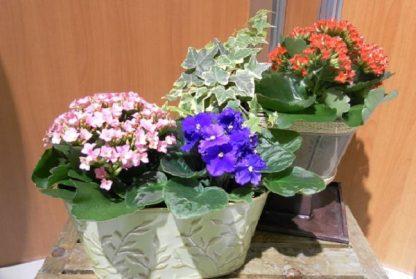 Double Planter (SW13-02)