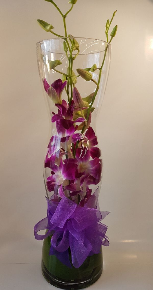 Orchids Under Glass (HD08-01)