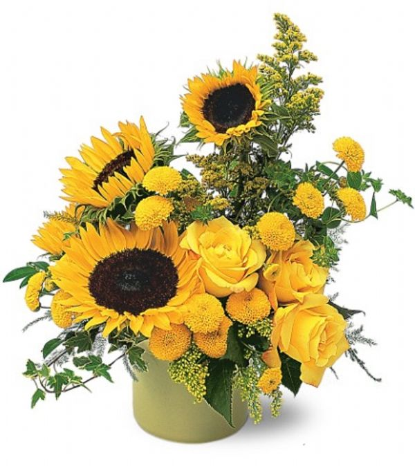 Pot of sunflowers tf a bunches flower co
