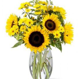 Sunflower Splash (TW-11)