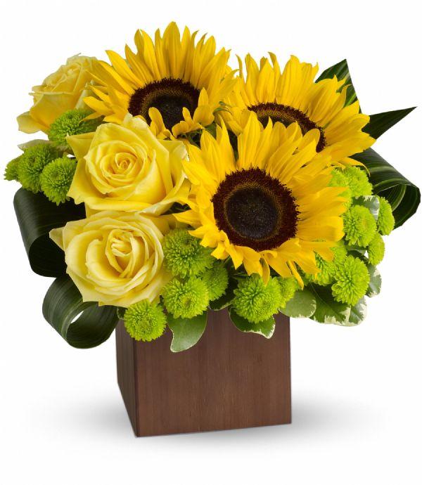 Sunflower Fantasy (T545-1A)