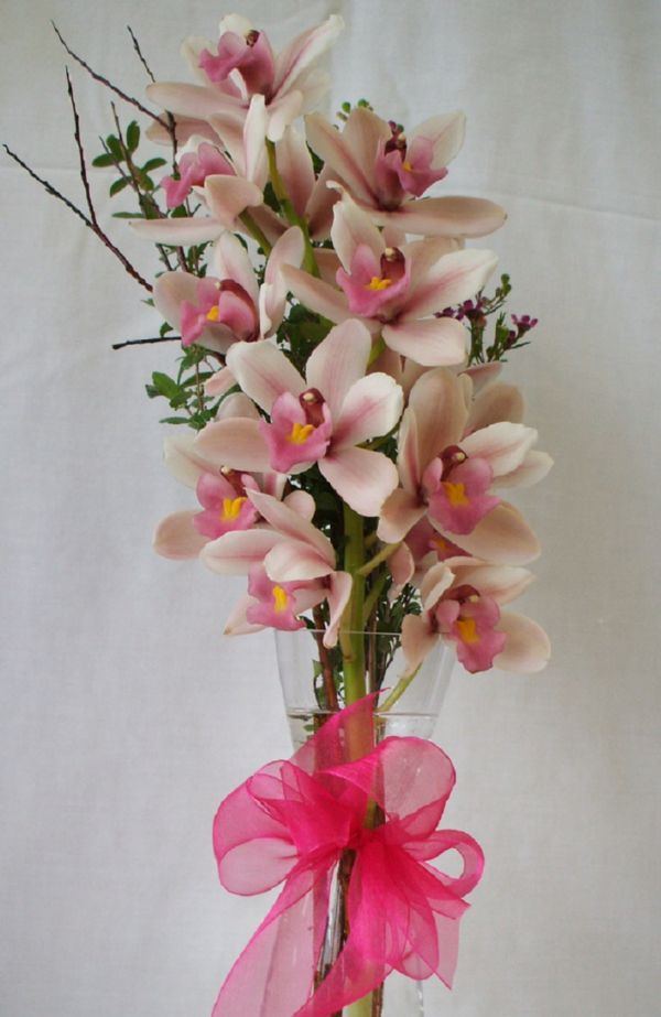Orchid Magic (VD09-02)
