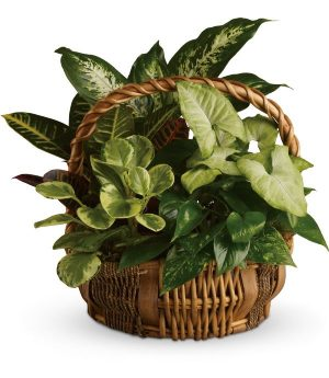 Tropical Plant Medley (T106-1A)