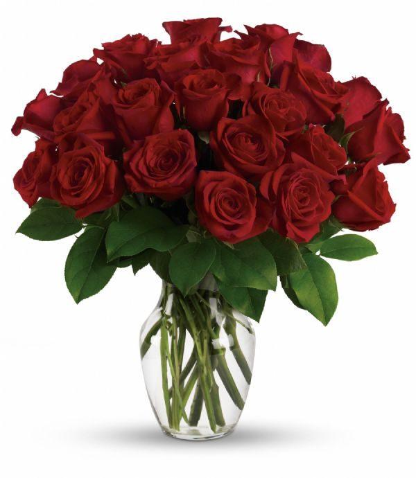 Red Rose Dream (TEV12-7C)