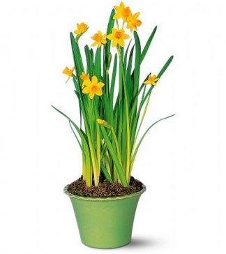 Spring Bulbs (T118-1)