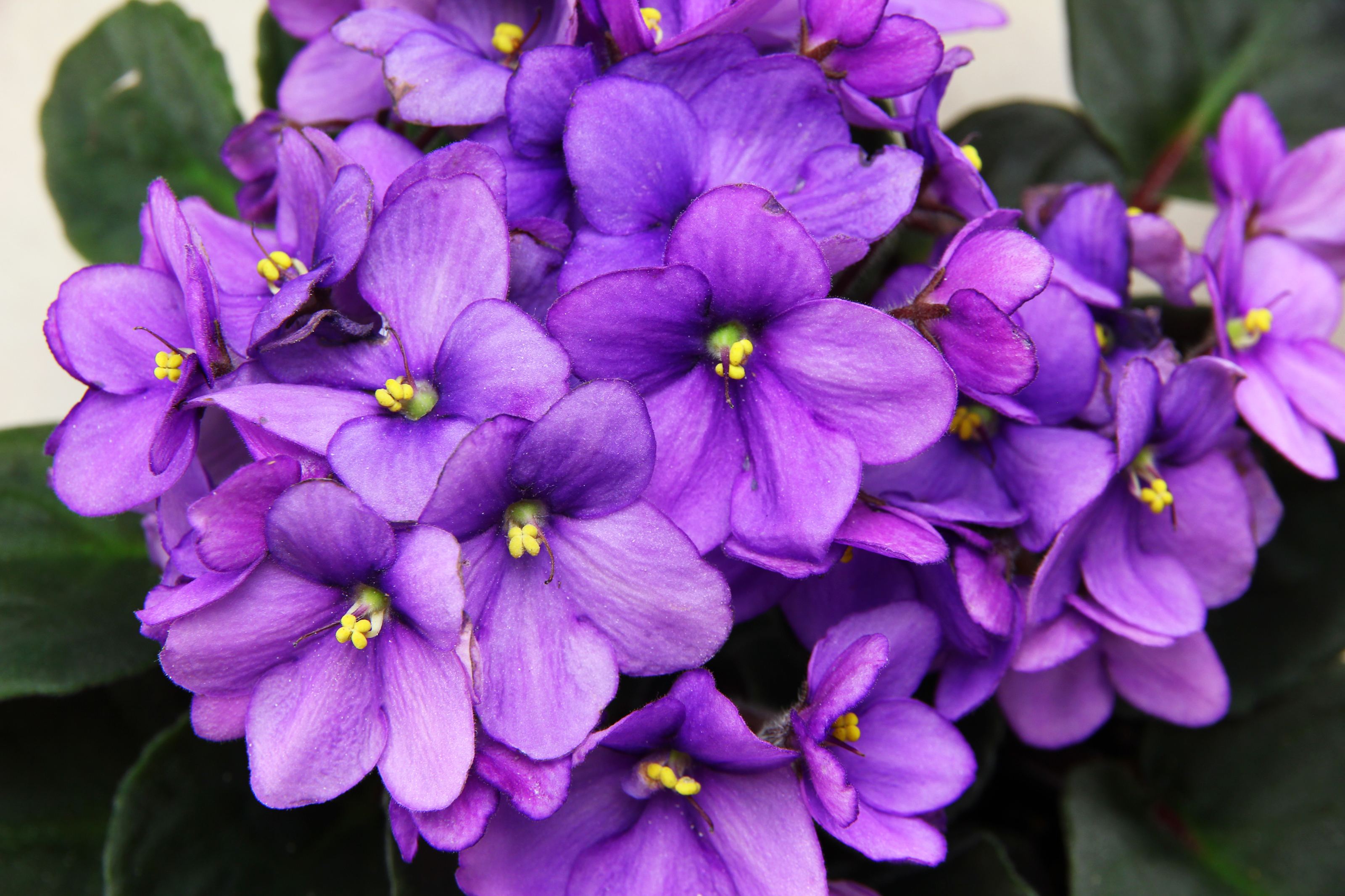Purple And Yellow Container Flowers