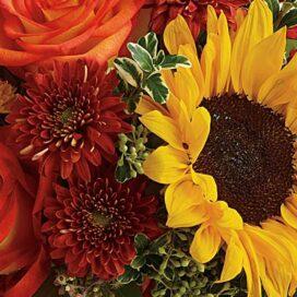 Late-Summer Sunflower Bunch (CF20-50)