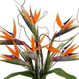 Big BIRD Bouquet (CFB6-19)