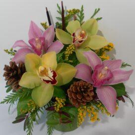 Alpine Orchid Aura (FA20-26)